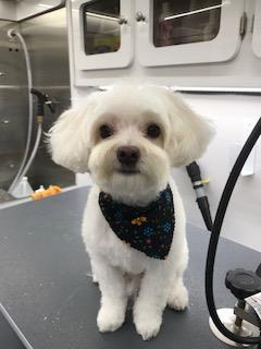 Dog Grooming Long Island Nassau County